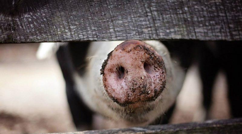 Niedersachsen fordert verpflichtendes Tierwohllabel