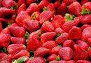 Erfolgloser Einbruchsversuch in Erdbeerstand – Supermarkt hatte vorgesorgt