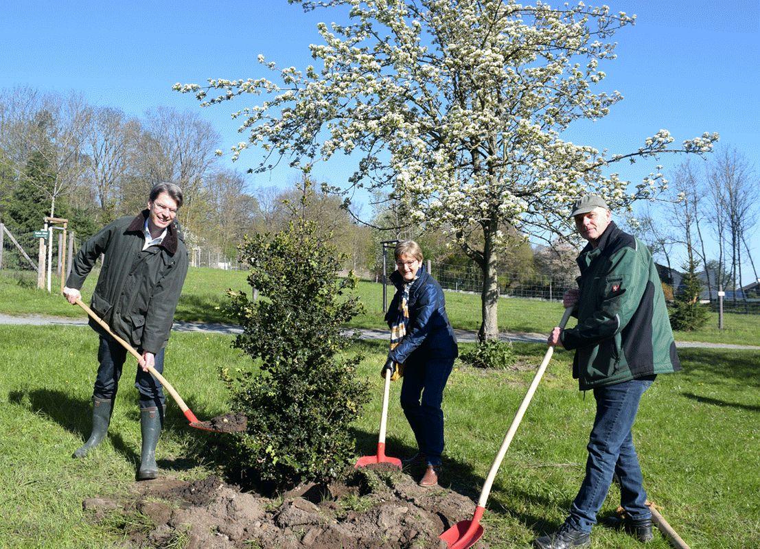 """""""Baum des Jahres 2021"""": Stechpalme im Wildgatter gepflanzt"""